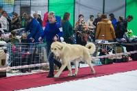Выставка собак в Туле, Фото: 94