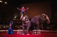 «Шоу Слонов» в Тульском цирке, Фото: 1