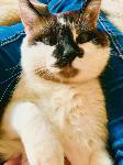 Тульские коты, которых достали хозяева на самоизоляции, Фото: 16