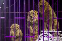 Шоу фонтанов «13 месяцев» в Тульском цирке – подарите себе и близким путевку в сказку!, Фото: 66