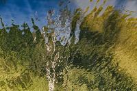 Летний день в богородицком парке, Фото: 32