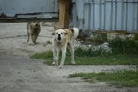 Бродячие собаки погубили рассаду тулячки и довели ее до сердечного приступа, Фото: 13