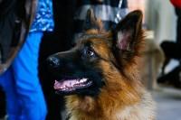 Выставка собак в Туле, Фото: 45