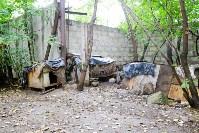 Собаки на тульской метеостанции, Фото: 3