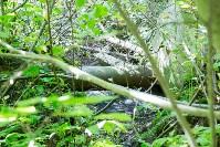 В реку Иншинку несколько лет стекает канализация, Фото: 9