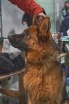 Выставка собак в Туле 26.01, Фото: 60