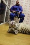 """Цирк """"Максимус"""" и тигрица в гостях у Myslo, Фото: 17"""