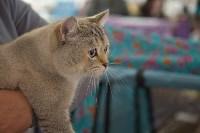 Выставка кошек в ГКЗ. 26 марта 2016 года, Фото: 62