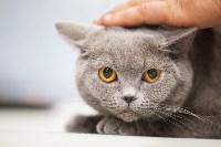 Выставка кошек в МАКСИ, Фото: 87