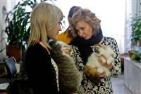 В Туле прошла международная выставка кошек «Зимнее конфетти», Фото: 8