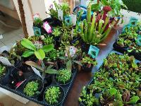 Укротитель хищных растений Сергей Куницын, Фото: 16