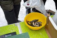 В Туле выбрали лучших рыбаков по ловле на блесну со льда, Фото: 60