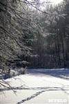 Зимняя сказка Платновского парка, Фото: 15