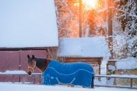 Снежное Поленово, Фото: 79