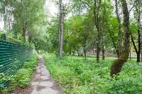 Яблоневый сад и роща на ул. Серова, Фото: 14