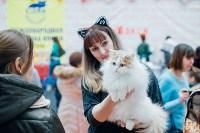 """Выставка """"Пряничные кошки"""" в ТРЦ """"Макси"""", Фото: 12"""