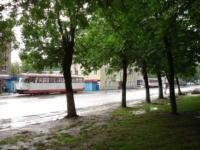 Упавшее дерево в Криволучье, Фото: 7