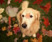 Самая счастливая собака в мире!, Фото: 8