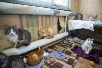 Волонтеры спасли кошек из адской квартиры, Фото: 19