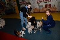 Выставка собак DogLand, Фото: 3