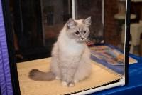Выставка кошек в Искре, Фото: 9