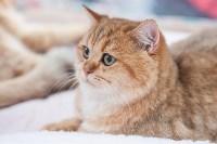 Выставка кошек в МАКСИ, Фото: 19