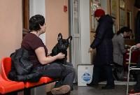 """Выставки собак в ДК """"Косогорец"""", Фото: 58"""