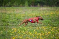 В Туле состоялись собачьи бега, Фото: 19