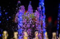 Шоу фонтанов «13 месяцев»: успей увидеть уникальную программу в Тульском цирке, Фото: 57