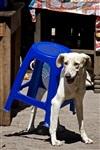 Кошки и собаки, проигравшие битву с мебелью, Фото: 11