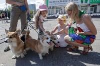 Фестиваль помощи животным в Центральном парке, Фото: 7