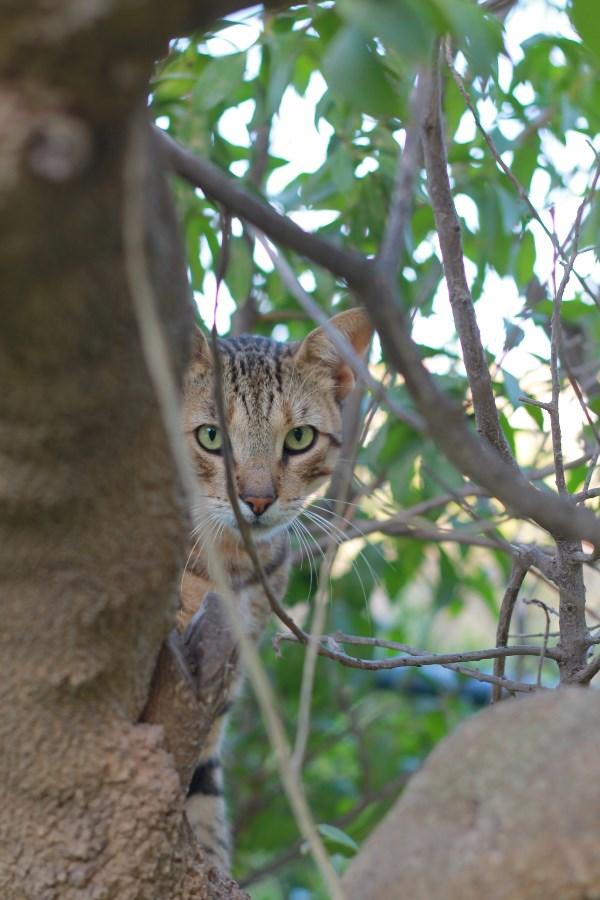 Кошки Туниса пугливы, но любознательны)