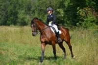 В Ясной поляне стартовал турнир по конному спорту, Фото: 48