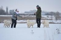Праздник северных собак на Куликовом поле , Фото: 43
