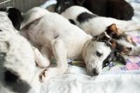 Благотворительный фестиваль помощи животным, Фото: 28