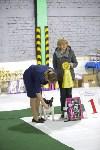 Выставка собак в Туле 14.04.19, Фото: 10