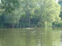 Плещутся в яснополянском пруду) Счастливые), Фото: 41
