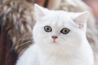 Выставка кошек в МАКСИ, Фото: 21