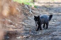 Тульские котики, Фото: 26