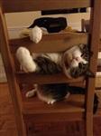 Кошки и собаки, проигравшие битву с мебелью, Фото: 13