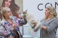 Выставка кошек в Туле, Фото: 79