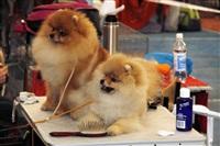 В Туле прошла всероссийская выставка собак, Фото: 2