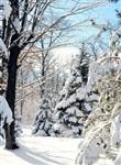 Русская зима, Фото: 1