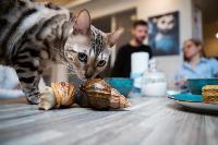 Экзотические животные в квартире, Фото: 64