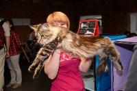 Выставка кошек в Искре, Фото: 23