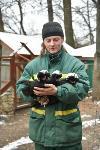 Зимовка зверей в Белоусовском парке, Фото: 4