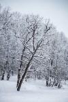 Темная сторона Платоновского парка, Фото: 4