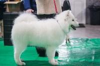 Выставка собак в Туле, Фото: 46