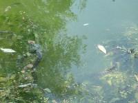 Вечные хозяева пруда плещутся в воде, Фото: 14