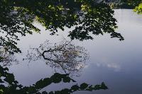 Летний день в богородицком парке, Фото: 22